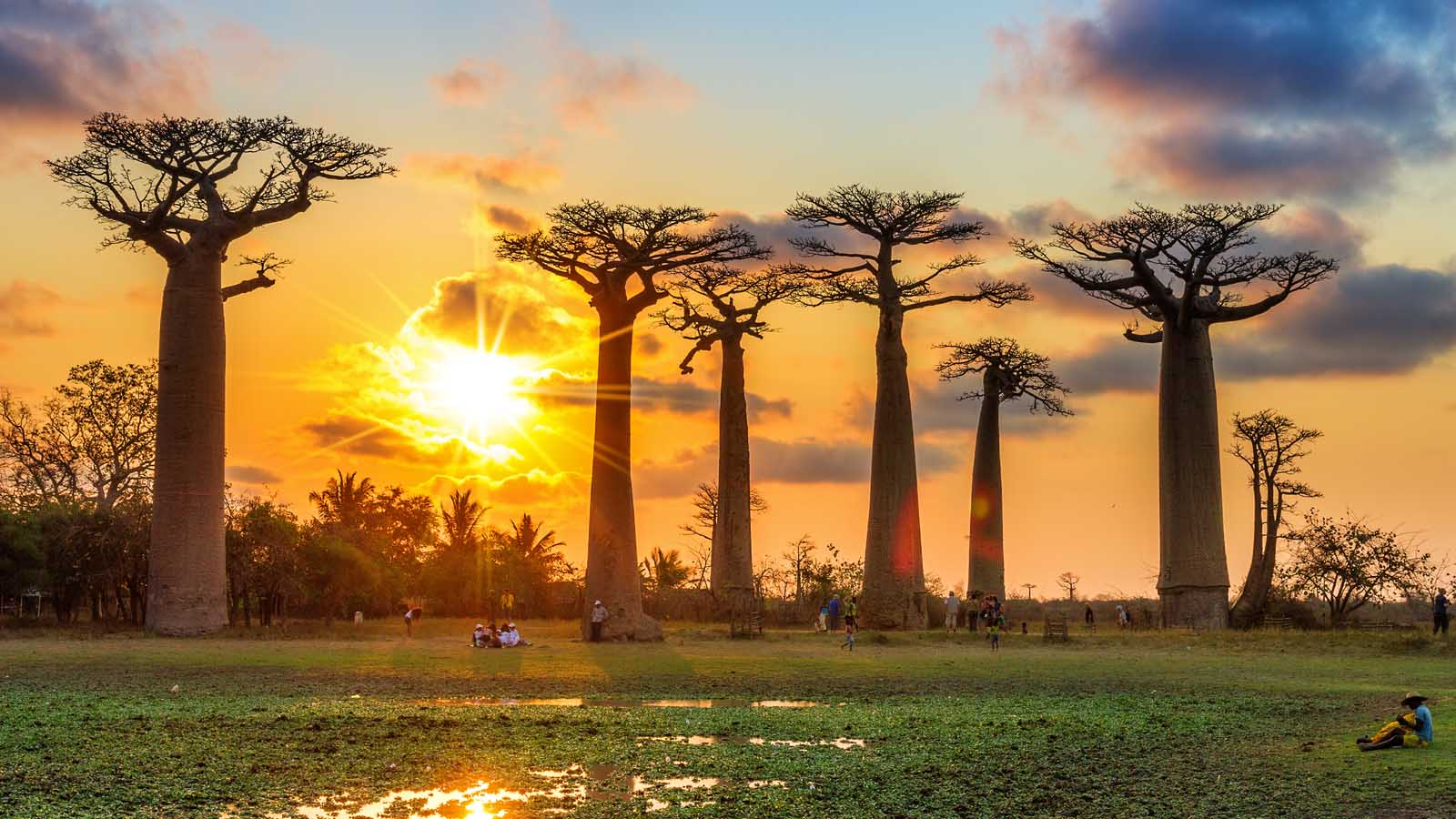 Madagascar tours and safari