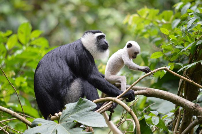 Rwanda tours and safari