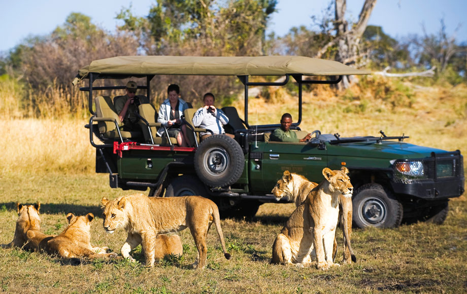 Top africa and Tours safaris