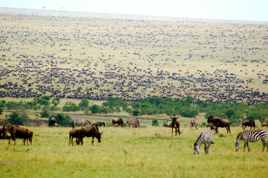 Africa luxury safaris