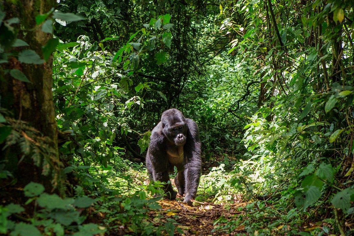 Best time in africa safari