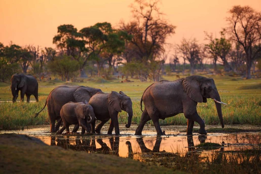 Africa family safaris