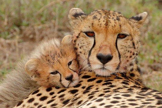 Kenya tours and safari