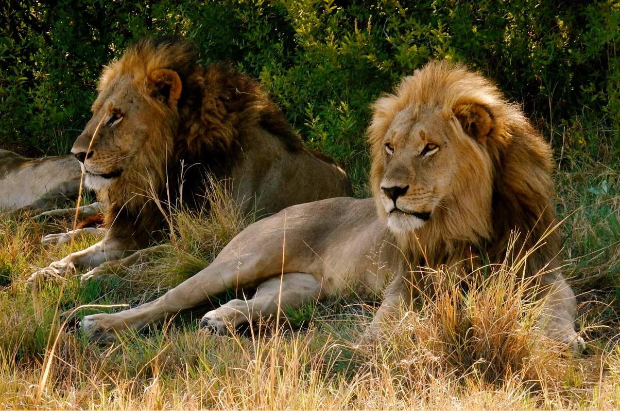 Africa bigfive safaris