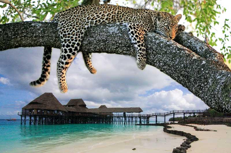 Madagascar flights schedules