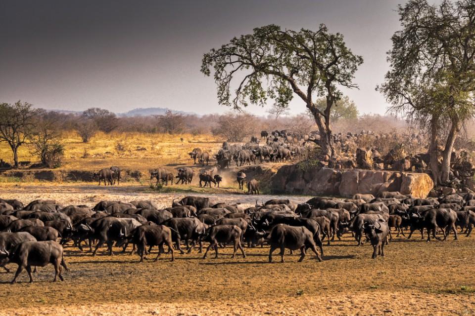 Africa bigfive festivals