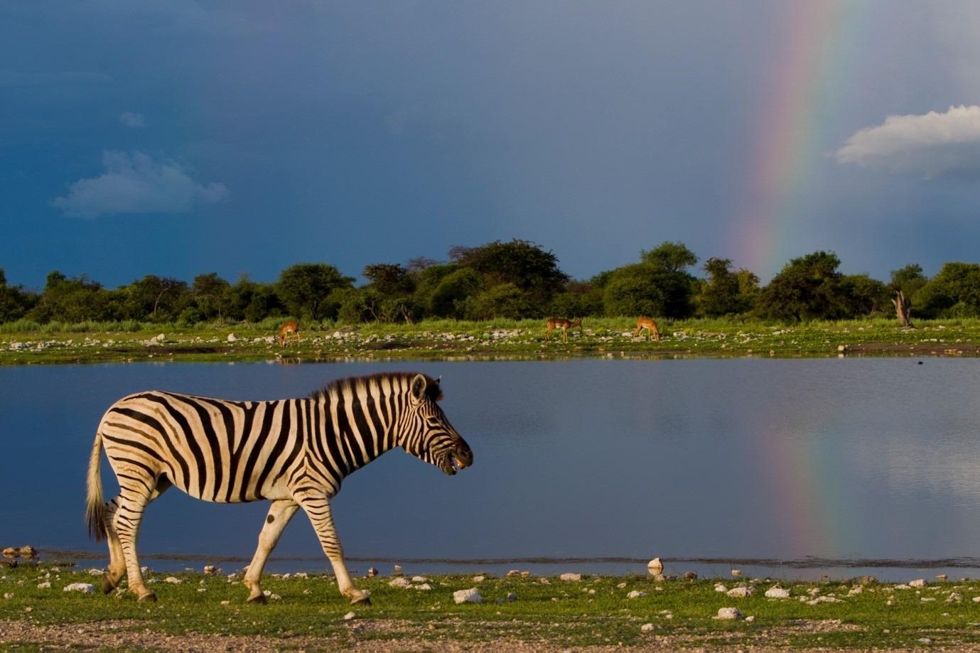 Namibia tours and safari
