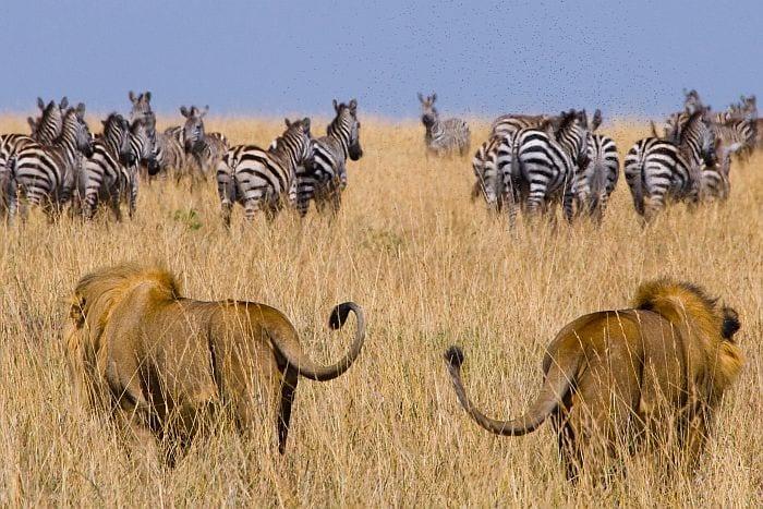 Get your next safari deal and discounts