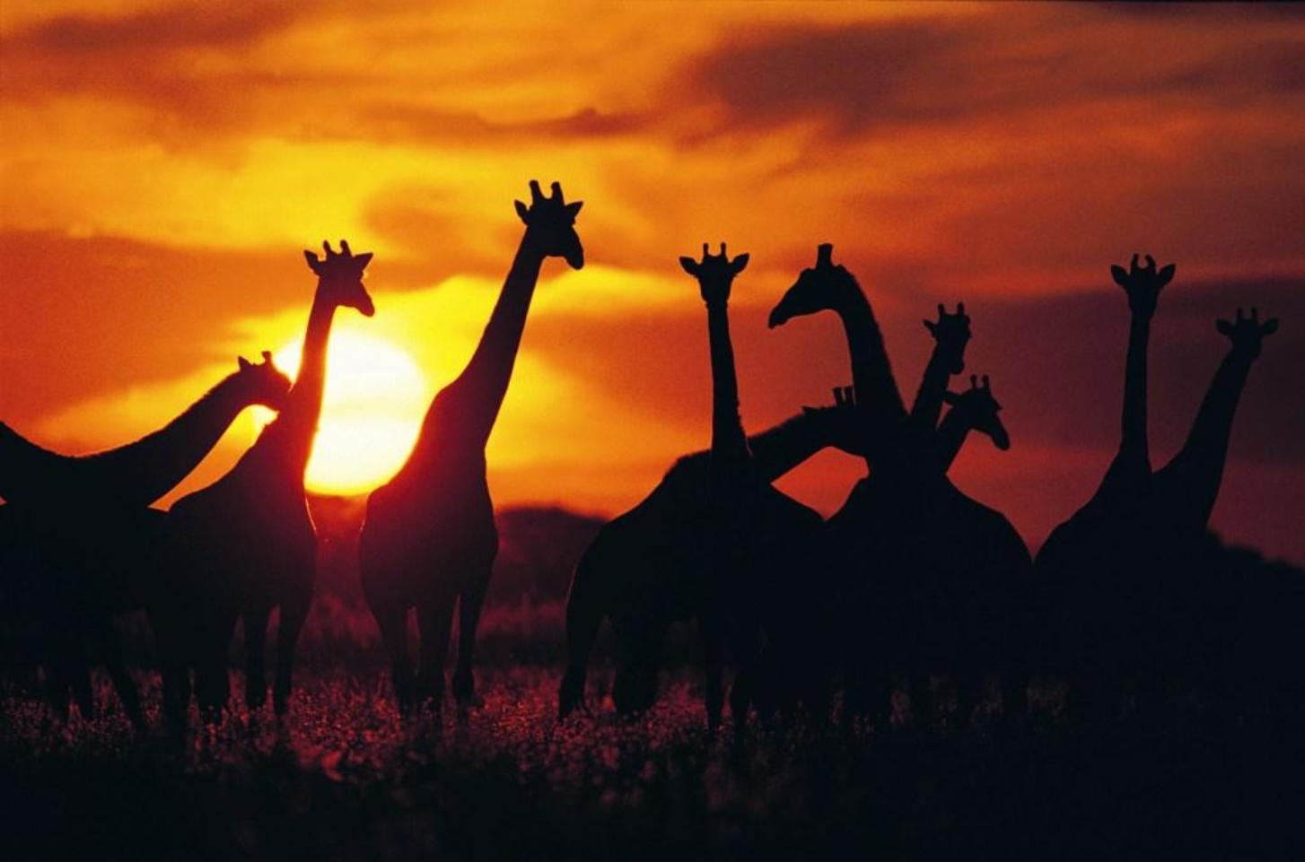 South africa tours and safari
